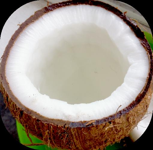 IMG_1237[1] coconut